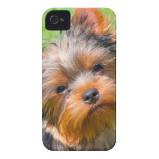 Yorkshire Terrier looking up Case-Mate iPhone 4 Case