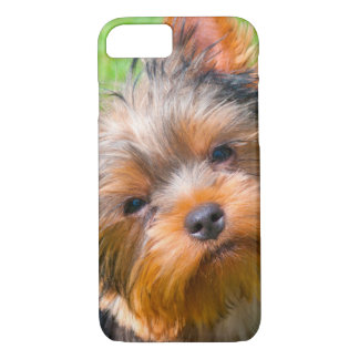 Yorkshire Terrier looking up iPhone 8/7 Case