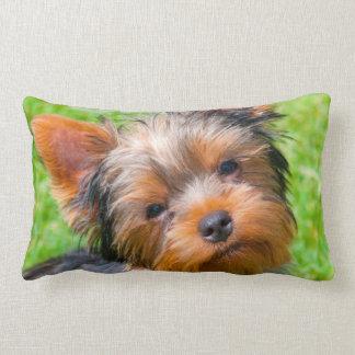 Yorkshire Terrier looking up Lumbar Pillow