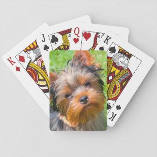 Yorkshire Terrier looking up Card Decks