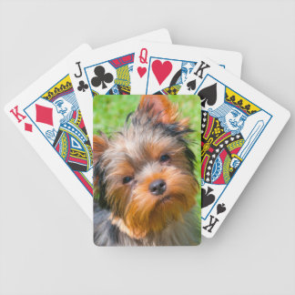 Yorkshire Terrier looking up Bicycle Playing Cards