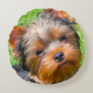 Yorkshire Terrier looking up Round Pillow