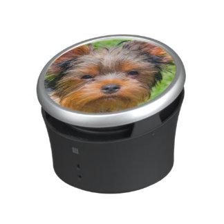 Yorkshire Terrier looking up Speaker
