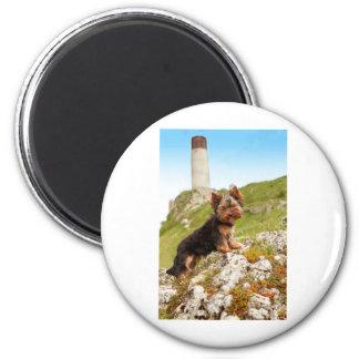 Yorkshire Terrier Refrigerator Magnets