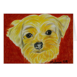 Yorkshire Terrier - Max Card