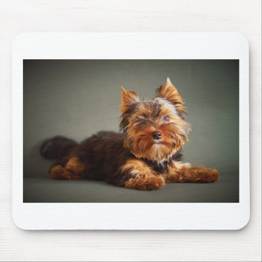 Yorkshire Terrier Mousemat