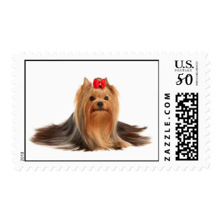 Yorkshire Terrier of show class Postage
