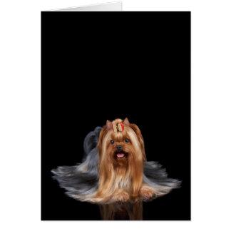Yorkshire Terrier on black Card