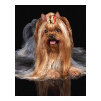 Yorkshire Terrier on black Letterhead