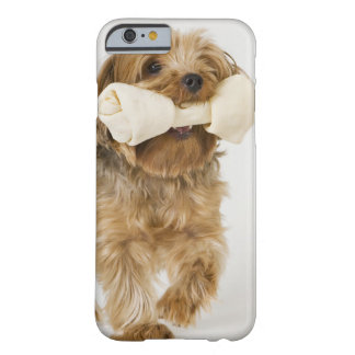 Yorkshire Terrier on white background walking Barely There iPhone 6 Case