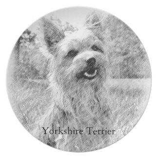 Yorkshire Terrier Pencil Drawing Plate