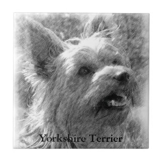 Yorkshire Terrier Pencil Drawing Tile