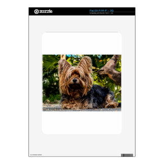 Yorkshire Terrier Pet Dog Skin For iPad