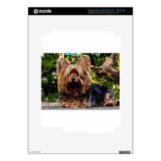 Yorkshire Terrier Pet Dog Skins For iPad 3