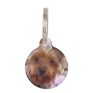 Yorkshire Terrier Pet Name Tag