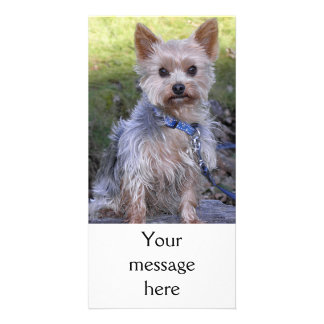 Yorkshire Terrier Photo Card