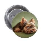 Yorkshire Terrier Pinback Button