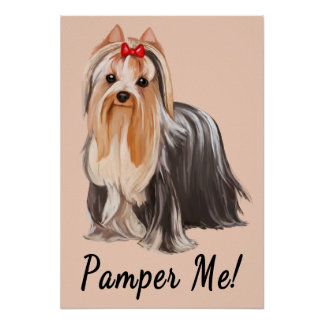 Yorkshire Terrier Portrait: Pamper Me! Poster