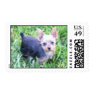 Yorkshire Terrier Postage Stamps