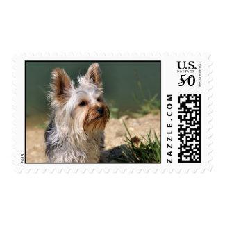 Yorkshire Terrier Postage