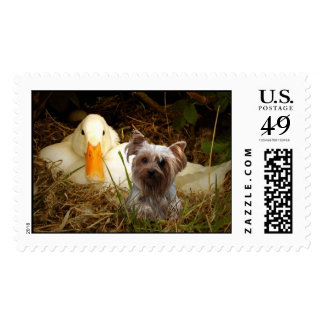 Yorkshire Terrier Postage With Duck
