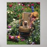 Yorkshire Terrier Poster Garden