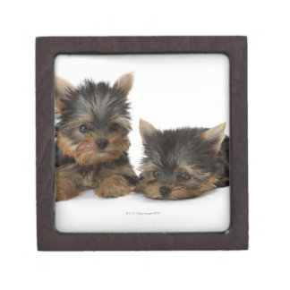 Yorkshire Terrier Premium Jewelry Boxes