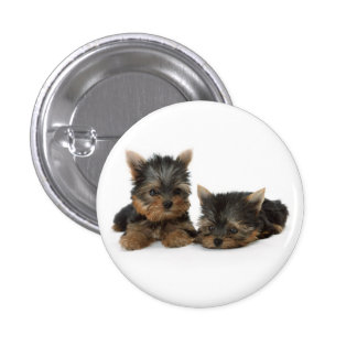 Yorkshire Terrier Puppies Button