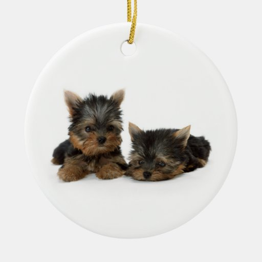 Yorkshire Terrier Puppies Ornament