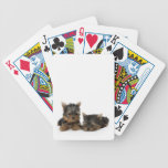 Yorkshire Terrier Puppies Playing Cards