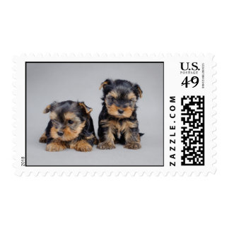 Yorkshire terrier puppies postage stamp