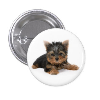 Yorkshire Terrier Puppy Button