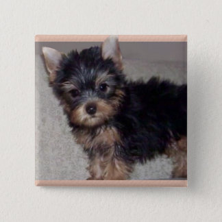 Yorkshire Terrier puppy button