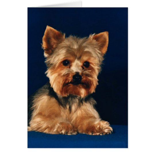 Yorkshire Terrier Puppy Card