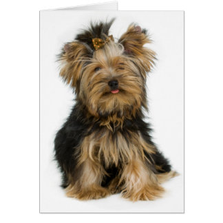 Yorkshire Terrier Puppy Dog Blank Card
