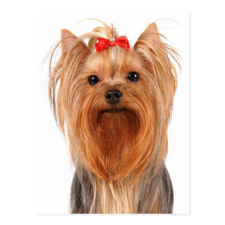 Yorkshire Terrier Puppy Dog Blank Post Card
