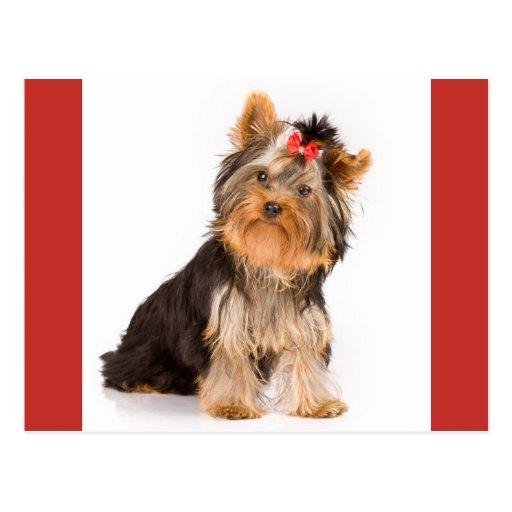Yorkshire Terrier Puppy Dog Blank Postcard