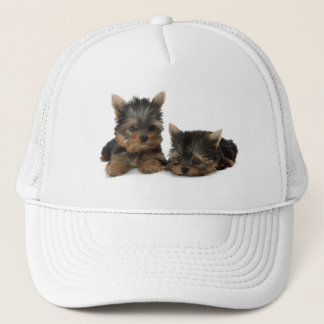 Yorkshire Terrier puppy dog cute photo hat