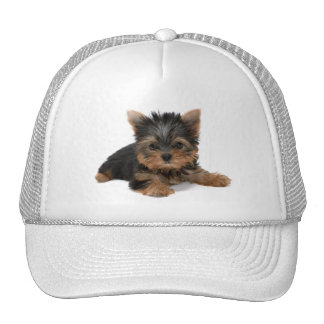 Yorkshire Terrier puppy dog cute photo hat