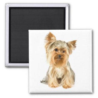 Yorkshire Terrier Puppy Dog Fridge Magnet