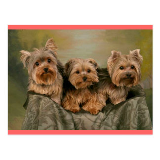 Yorkshire Terrier Puppy Dog Greeting Postcard