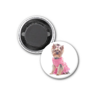Yorkshire Terrier Puppy Dog in a Pink Dress Magnet