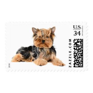 Yorkshire Terrier Puppy Dog Postage