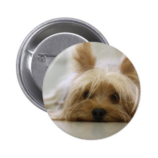 yorkshire terrier puppy pet cute dog face eyes buttons