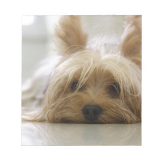 yorkshire terrier puppy pet cute dog face eyes memo pads