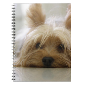 yorkshire terrier puppy pet cute dog face eyes notebook