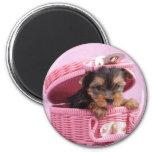 Yorkshire terrier puppy refrigerator magnet