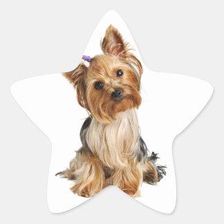 Yorkshire Terrier Puppy Star Sticker