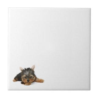 Yorkshire Terrier Puppy Tile
