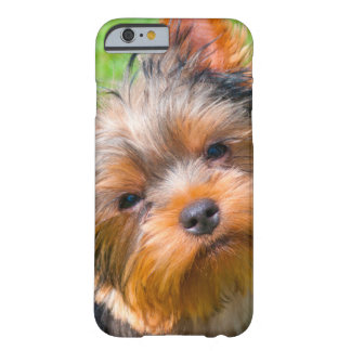 Yorkshire Terrier que mira para arriba Funda Barely There iPhone 6